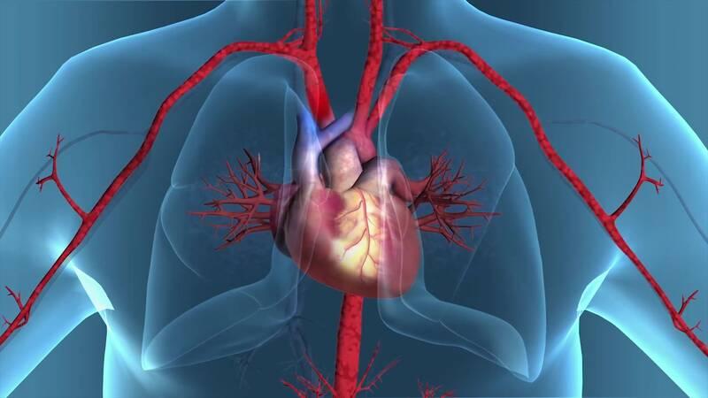 Organer i kroppen